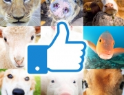 facebook clinica veterinaria
