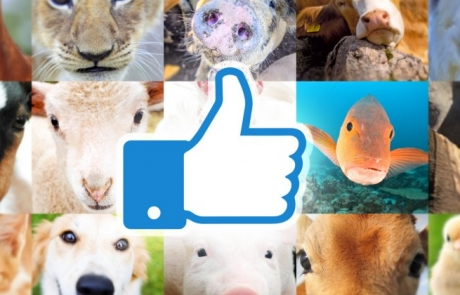 facebook_animals